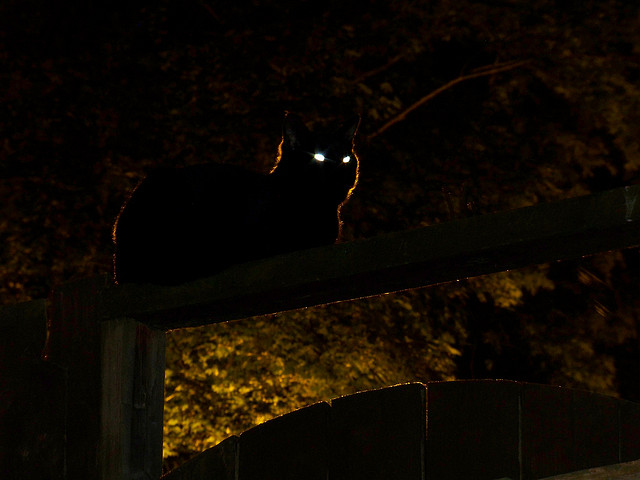 A cat with glowing sitting on top of a fence at night