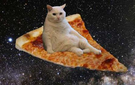 photo of a white cat sitting on a pizza slice in outer space