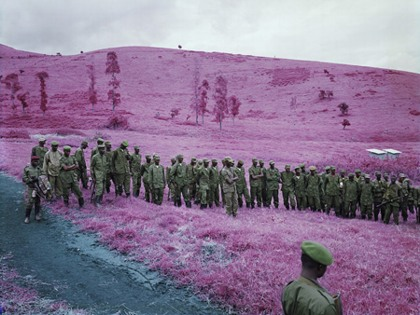 Purple field, via Horses Think